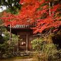 写真: 紅葉 8