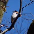 写真: 野鳥 2