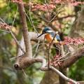 写真: 野鳥 6