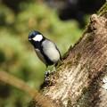 写真: 野鳥 7