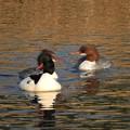 写真: 野鳥 26
