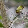写真: 野鳥 27