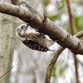 写真: 野鳥 29
