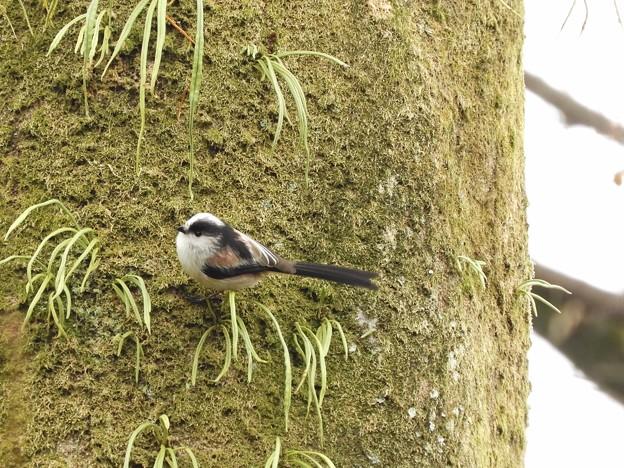 写真: 野鳥 30