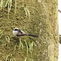 Photos: 野鳥 30