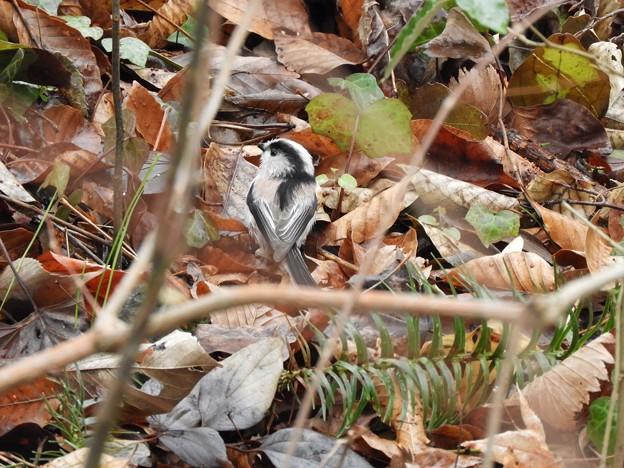 写真: 野鳥 31