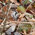 野鳥 31