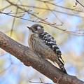 写真: 野鳥 41