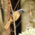 写真: 野鳥 42