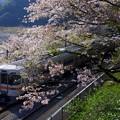 2017/04/16・・・麓は春No.02