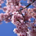 2014/04/23・・・桜は満開No.02