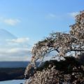 2017/04/23・・・富士と桜No.01