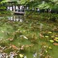 2017/07/09・・・モネの池No.03