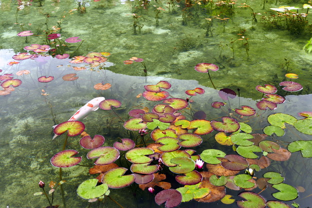 2017/07/09・・・モネの池No.09
