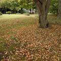 写真: 落ち葉の庭 03112017