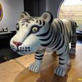 写真: White Tiger 24112017