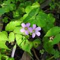 裏山に咲く花々01
