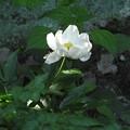 裏山に咲く花々02