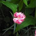 裏山に咲く花々04