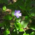 写真: 裏山に咲く花々06
