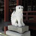 Photos: 太宰府天満宮55 本殿前の白い大理石の狛犬(角ある吽形)