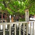 Photos: 太宰府天満宮56 皇后の梅