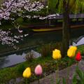 写真: 處處花香