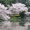 Photos: 春 満開