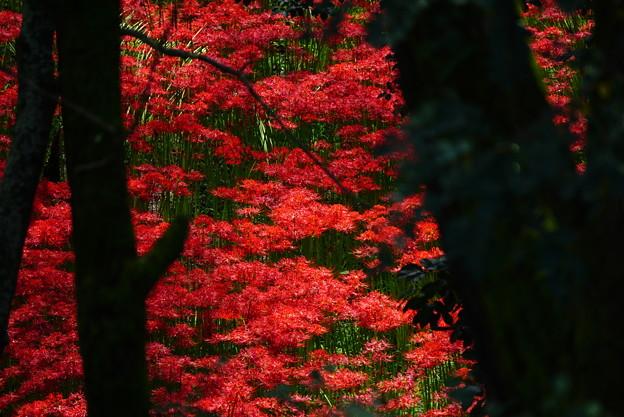 紅葉ではなく。。。