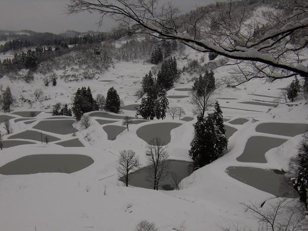 写真: 山古志の棚田