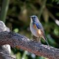幸せを呼ぶ青い鳥3