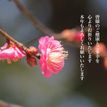 Photos: 謹賀新年