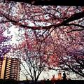 写真: 春の夕暮れ