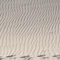 写真: 風紋