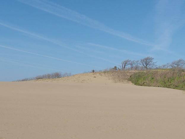 写真: 砂丘