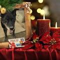 写真: Merry Xmas