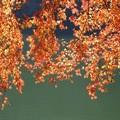 降り注ぐ秋色