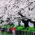 桜散る下で