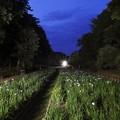 Photos: ライトアップ