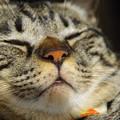 写真: 寝顔アップ~ナナ