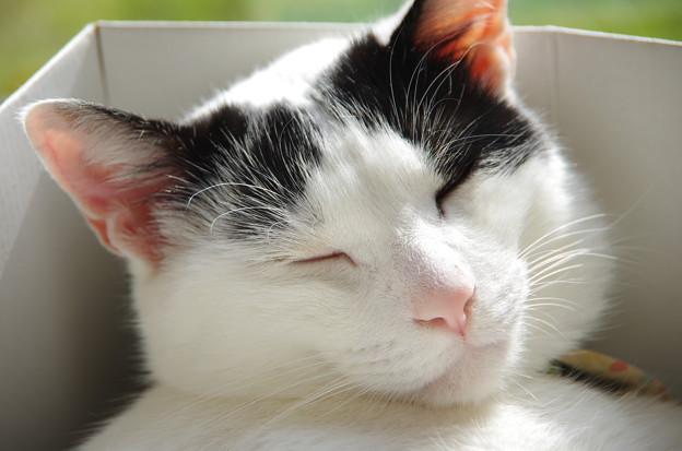 写真: 寝顔アップ~マカロン