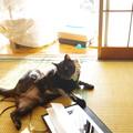 写真: かきかき