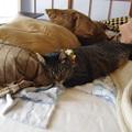 写真: ベッドですやすや