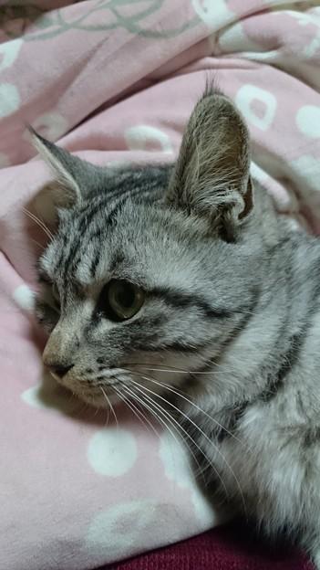 ネコちゃん1