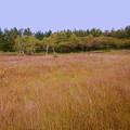 写真: 入笠湿原で