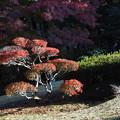 写真: 殿ヶ谷戸庭園にて4