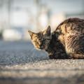 汚い猫@関宿