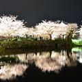 Photos: 夜桜2