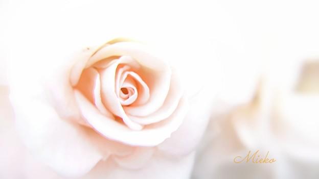 Photos: 今年も青薔薇、撮れなかったぁ(*T^T)