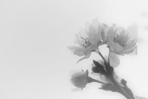 写真: 春待ち花